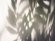 Leinwandbild Motiv Tree leaves shadow on wall Nature Abstract background