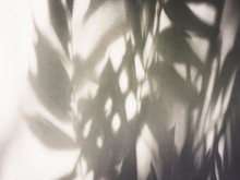 Tree Leaves Shadow On Wall Nat...