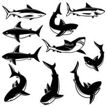 Set Of Shark Illustrations. Design Element For Logo, Label, Print, Badge, Poster.