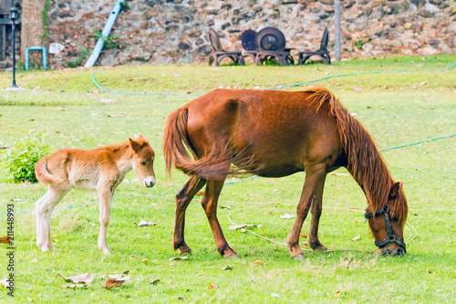 Baby horse with mother in green grass
