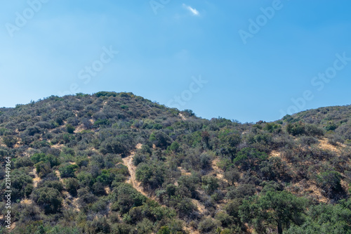 Staande foto Blauw Hiking trails cover hills in California forest on hot summer morning