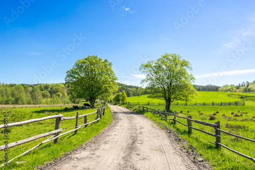 Poster Campagne Country landscape, farm field with grass, pasture in countryside scenery with rural road