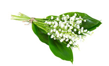 Lilly Of The Valley Isolated O...