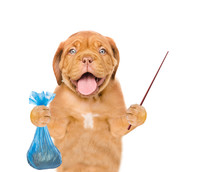 Puppy Holds Plastic Bag And Pointing Stick. Concept Cleaning Up Dog Droppings. Isolated On White Background
