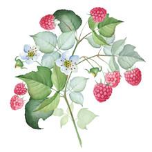 Watercolor Raspberry Branch Is...