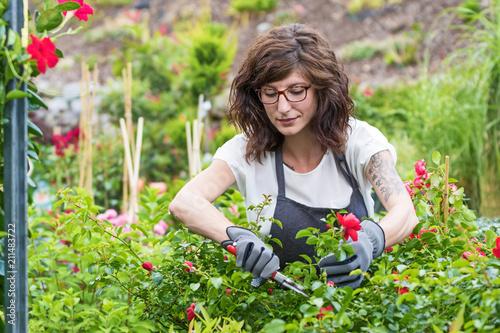Fototapeta Gärtnerin am Arbeitsplatz beim schneiden der Rosen