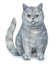 Picture Of A British Shorthair Cat In White Background. Watercolor Hand Painted Illustration