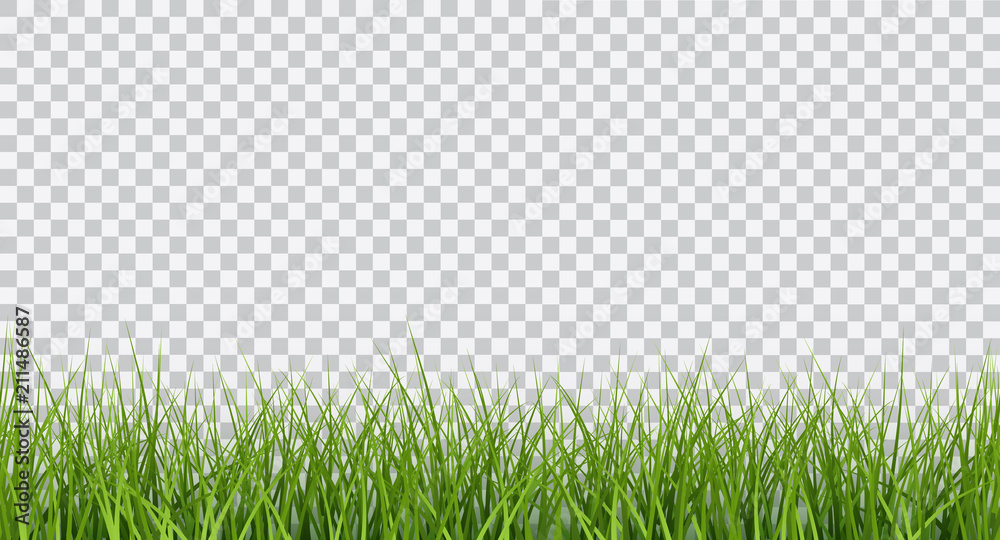 Fototapeta Vector bright green realistic seamless grass border isolated on transparent background