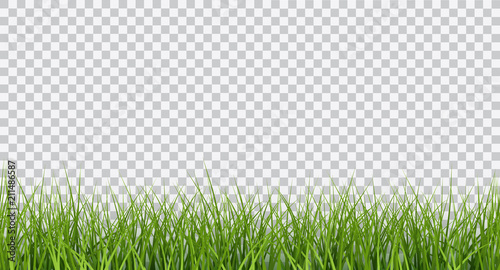 Fototapeta Vector bright green realistic seamless grass border isolated on transparent background obraz