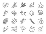 Spices and herbs icon set. Included icons as basil, thyme, ginger, pepper, parsley, mint and more.