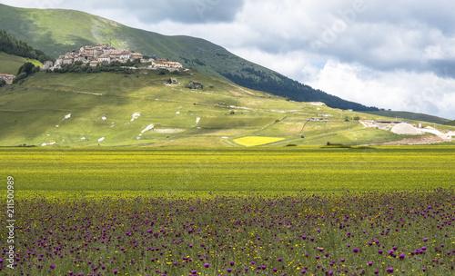 Fotografie, Obraz giallo e viola