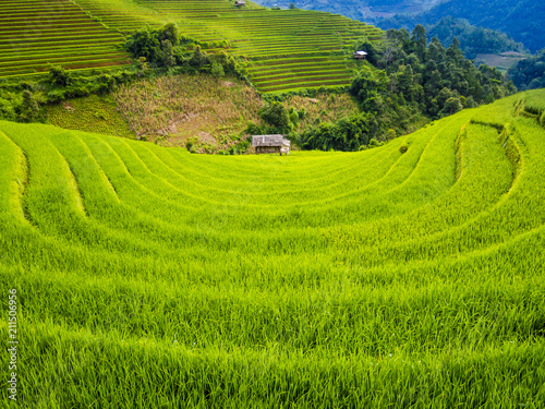 In de dag Rijstvelden Scenic landscape of terraced rice field with farm hut, Mu Cang Chai, Yen Bai Province, northern Vietnam