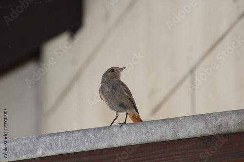 Tuinposter Vogel ave
