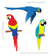 Parrot Macaw Cartoon Vector Il...