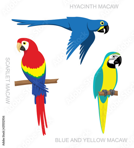 Parrot Macaw Cartoon Vector Illustration Canvas Print