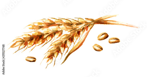 Obraz Ears of wheat and seeds. Watercolor hand drawn illustration, isolated on white background - fototapety do salonu