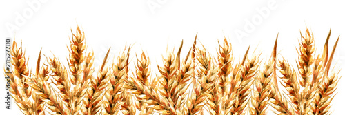 Fototapeta Ears of wheat. Watercolor hand drawn gorizontal illustration, isolated on white background obraz