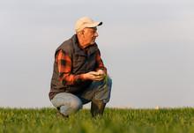 Senior Farmer In Wheat Field E...