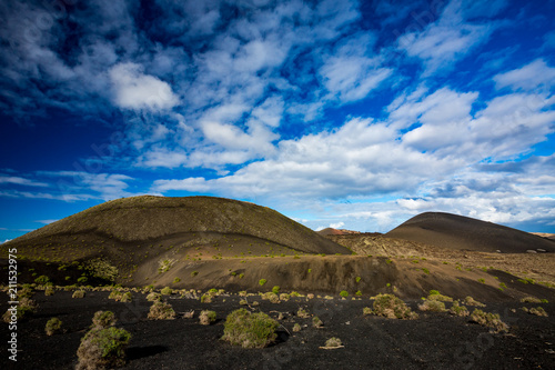 Tuinposter Canarische Eilanden Lanzarote countryside spring landscape view with green round bushes growing on black pebbles volcanic soil