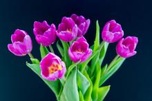 Close-up Of Purple Tulip Bouquet Over Black Background