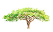 Leinwandbild Motiv watercolor illustration of a southern tree in africa, drawing by hand part of a savannah nature
