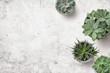 Leinwandbild Motiv minimalist background with various succulents on a painted white wooden desk, top view, copyspace