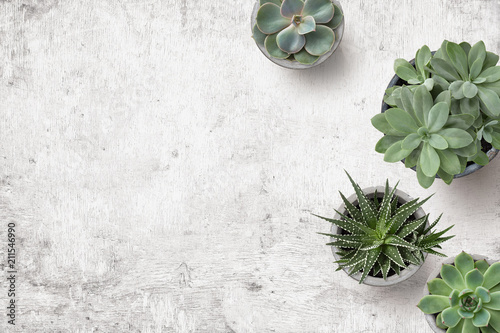 Fotobehang Planten minimalist background with various succulents on a painted white wooden desk, top view, copyspace