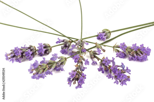 Photo  Flowers  of violet lavender, isolated on white background