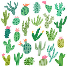 Vector Cactus Illustration Isolated On White