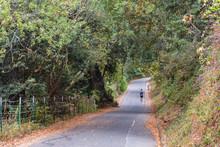 Lone Hiker On Paved Path, Sawyer Camp Trail, San Mateo, California