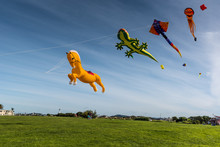 String Of Huge, Animal-theme Kites Flying In A Blue Sky At Matariki - Maori New Year.