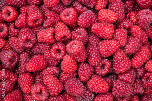 Close up of a harvest of fresh red raspberries, beautiful nature background