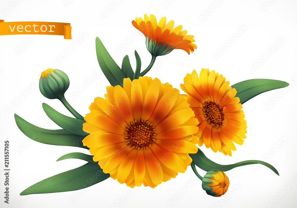 Fototapety, obrazy: Calendula. 3d realistic vector icon