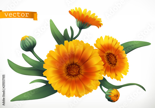 Obraz Calendula. 3d realistic vector icon - fototapety do salonu