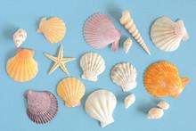 貝殻 ひとで 水色背...