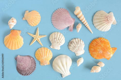 Fototapeta 貝殻 ひとで 水色背景