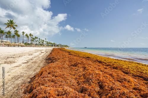 Fotobehang Centraal-Amerika Landen Punta Cana, Dominican Republic - June 17, 2018: : sargassum seaweeds on ocean beach in Bavaro, Punta Cana. Due to global warming, the altered ocean current bring sargasso to Dominican Republic coast.