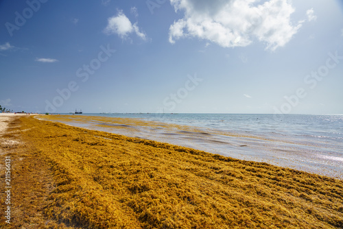 Staande foto Centraal-Amerika Landen Punta Cana, Dominican Republic - June 17, 2018: : sargassum seaweeds on ocean beach in Bavaro, Punta Cana. Due to global warming, the altered ocean current bring sargasso to Dominican Republic coast.