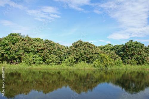 Fototapeta Beautiful landscape of longan farm,Tropical fruits farm in Thailand obraz na płótnie