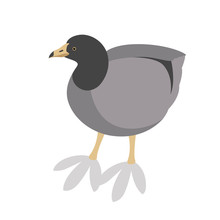 American Coot  Profile Side Vector Illustration Flat