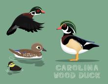 Carolina Wood Duck Cartoon Vec...