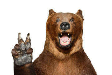 Portrait of a funny brown bear showing a peace gesture, isolated on a white background