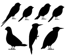 Bird Black Silhouette Collection. Pigeon, Sparrow, Titmouse, Swallow, Woodpecker, Starling, Bullfinch. Flat Birds Icon. Vector Illustration Isolated On White Background
