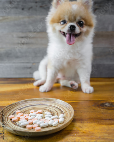 Selective Focus On Tablet Drugs With Blur Pomeranian Dog Sitting On