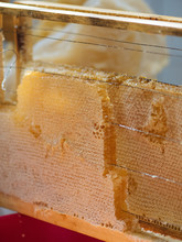 Beautiful Honeycomb On Wood Frame