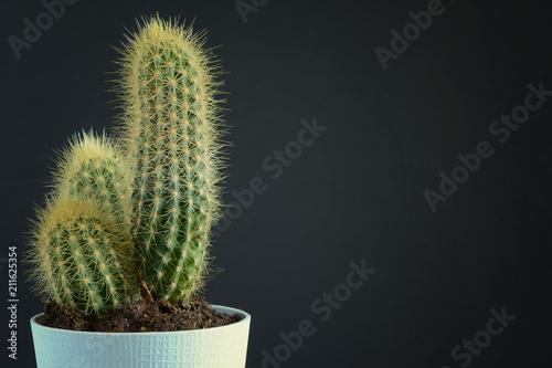 Foto op Canvas Cactus Cactus in a blue pot on a black background. Empty place for inscriptions . Copy space.