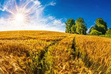 Summer Landscape With Cornfield And Bright Sun