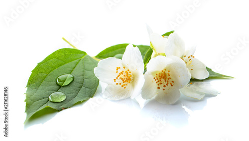 Branch of blooming jasmine on white background. Poster Mural XXL