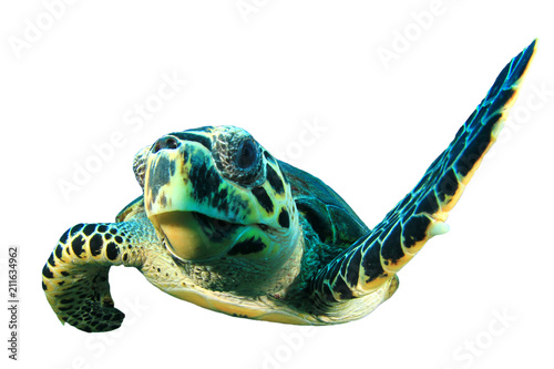 Sea Turtle cutout white background
