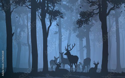 Fototapeta premium stado jeleni